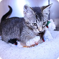 Adopt A Pet :: Jasmine - Lumberton, NC