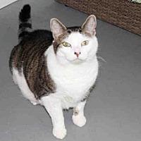 Adopt A Pet :: LUKE - Hampton Bays, NY