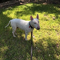 Adopt A Pet :: Casper - Houston, TX