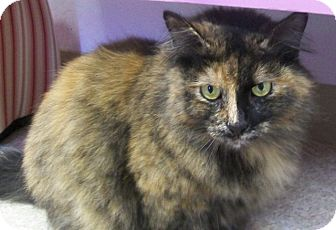 Domestic Longhair Cat for adoption in Grants Pass, Oregon - Emma