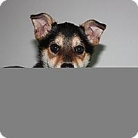 Adopt A Pet :: Belle - Stilwell, OK