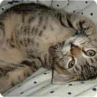 Adopt A Pet :: Wiley - Portland, OR