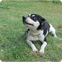 Adopt A Pet :: Squirrel - Conyers, GA