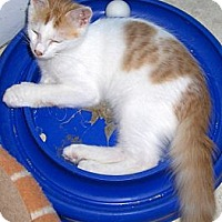 Adopt A Pet :: Paws - Richmond, VA