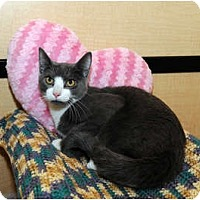 Adopt A Pet :: Nougat - Farmingdale, NY