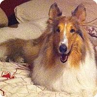 Adopt A Pet :: Bailey - Minneapolis, MN