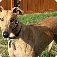 Adopt A Pet :: PXZ Bullseye