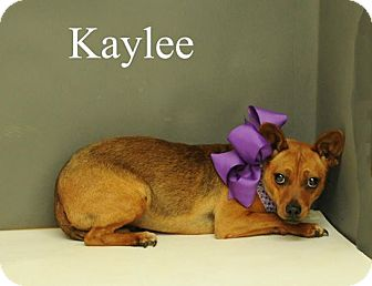 Feist Mix Puppy for adoption in Bolivar, Tennessee - Kaylee