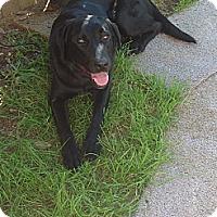 Adopt A Pet :: Hana - Philadelphia, PA