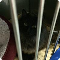 Adopt A Pet :: Keegan - Byron Center, MI
