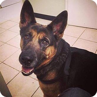 German Shepherd Dog Mix Dog for adoption in Cambridge, Ontario - Sheena