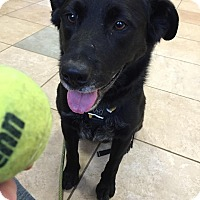 Adopt A Pet :: Rudy - in Maine! - kennebunkport, ME