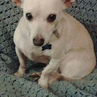 Adopt A Pet :: ROCKY - Pasadena, CA