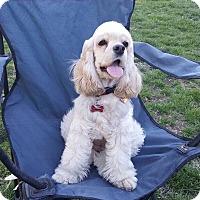 Adopt A Pet :: Honey - La Mirada, CA