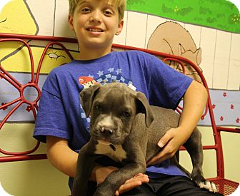 American Pit Bull Terrier Mix Puppy for adoption in Elyria, Ohio - Justice