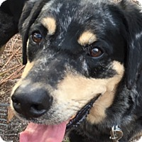 Adopt A Pet :: Ranger C - Irmo, SC