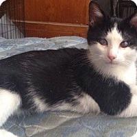 Adopt A Pet :: Scruffy - Enid, OK