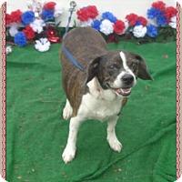 Adopt A Pet :: STELLA SEE ALSO DOT - Marietta, GA
