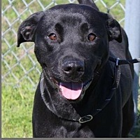 Adopt A Pet :: Mambo - Waggaman, LA