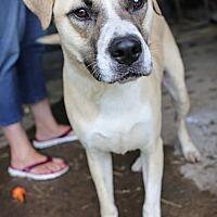 Adopt A Pet :: Riley - St. Louis, MO