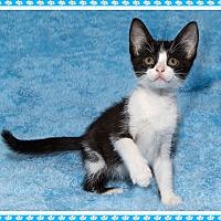 Adopt A Pet :: Tiffany - Mt. Prospect, IL