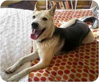 Shepherd (Unknown Type) Mix Dog for adoption in Vista, California - Canyon