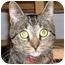 Photo 1 - Domestic Shorthair Cat for adoption in Marion, North Carolina - Tex