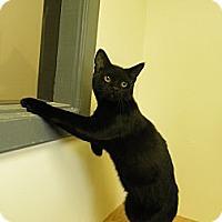 Adopt A Pet :: Johny Cash - Milwaukee, WI