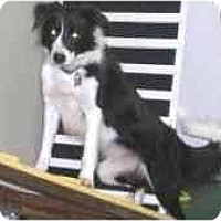 Adopt A Pet :: Maggie--ACTIVE - Tiffin, OH