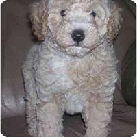 Adopt A Pet :: Thumper - Evansville, IN