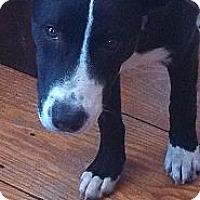 Adopt A Pet :: Blake - PENDING, in Maine - kennebunkport, ME