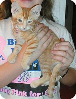 Domestic Mediumhair Kitten for adoption in San Marcos, Texas - Lucy, Baby,  Garfield & Taylor