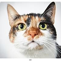 Adopt A Pet :: Liza - New York, NY