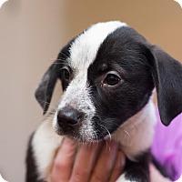 Adopt A Pet :: Wyatt - Minneapolis, MN