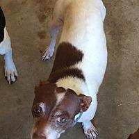 Adopt A Pet :: Norman - Blanchard, OK