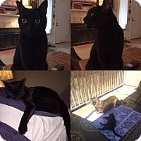 Adopt A Pet :: Ms Kitty - Sacramento, CA