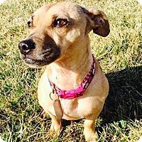 Adopt A Pet :: Junie B. - Dayton, OH