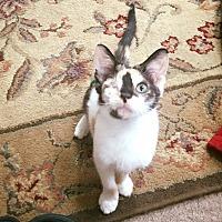 Adopt A Pet :: Theia - Chicago, IL