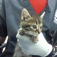 Adopt A Pet :: LUCA - Conroe, TX