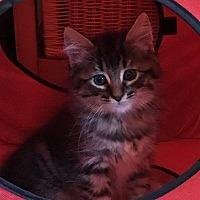 Adopt A Pet :: Patrick - Half Moon Bay, CA