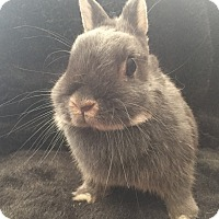 Adopt A Pet :: Bijou - Watauga, TX
