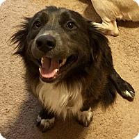 Adopt A Pet :: Bella Rose - Alpharetta, GA