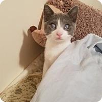 Adopt A Pet :: Margaret - New York, NY