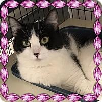 Adopt A Pet :: Jacqueline - Kalamazoo, MI