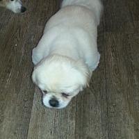 Adopt A Pet :: Rags - Dothan, AL
