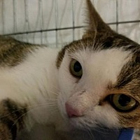 Adopt A Pet :: Mary - Balto, MD