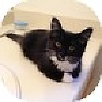 Adopt A Pet :: Midnite - Vancouver, BC