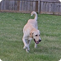 Adopt A Pet :: Bo - Lewisville, IN