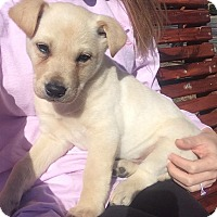 Adopt A Pet :: Mr.Peanut Butter - Conway, AR
