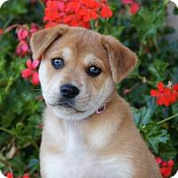Adopt A Pet :: Jane von Maysie - Thousand Oaks, CA